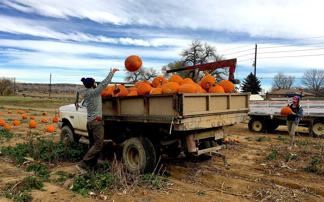Farm to Table Pumpkins for Pigs